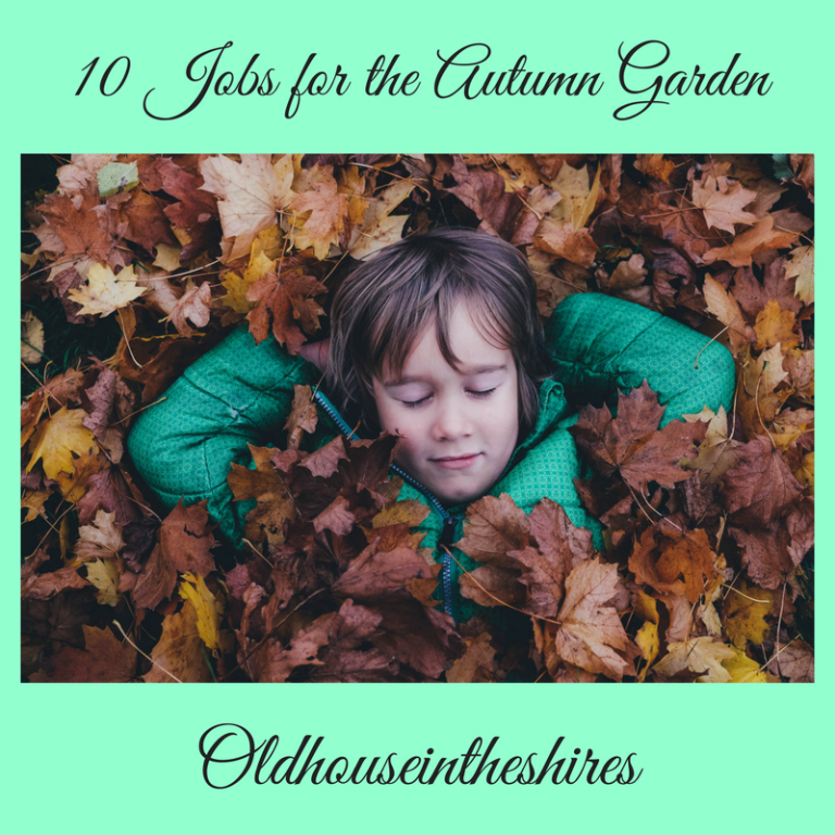 10 Jobs for the Autumn Garden