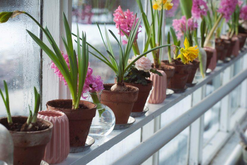 Bulbs to plant thisAutumn