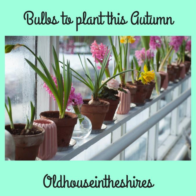 Bulbs to plant this Autumn