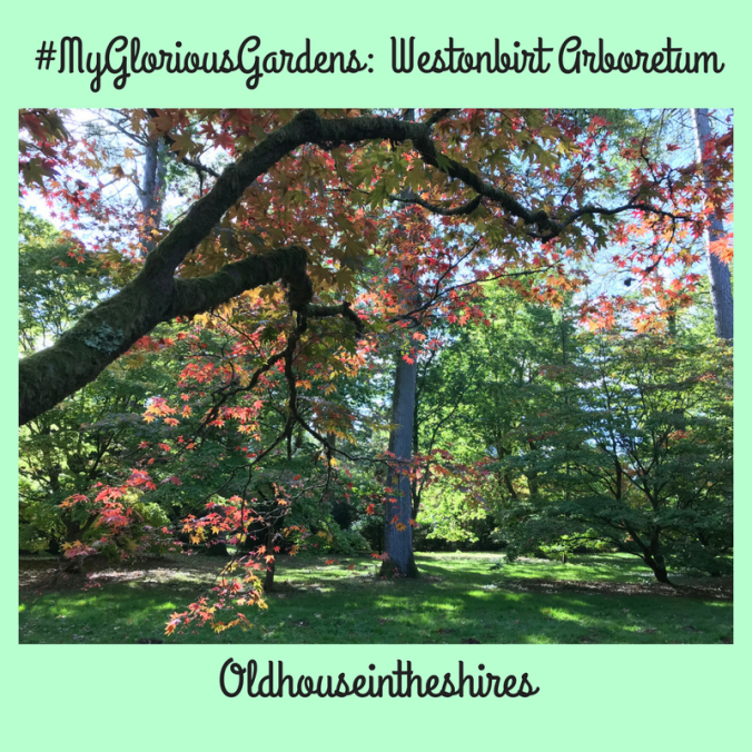 #MyGloriousGardens; Westonbirt Arboretum